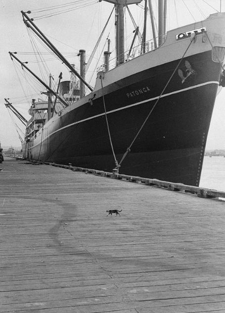 Портовый кот, 1957 г.