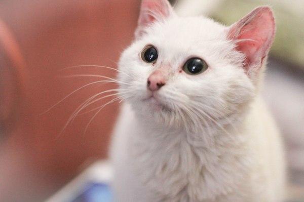 Котенок ищет дом Кот, В добрые руки, Отдадим, Кошка ищет дом, Видео, Длиннопост
