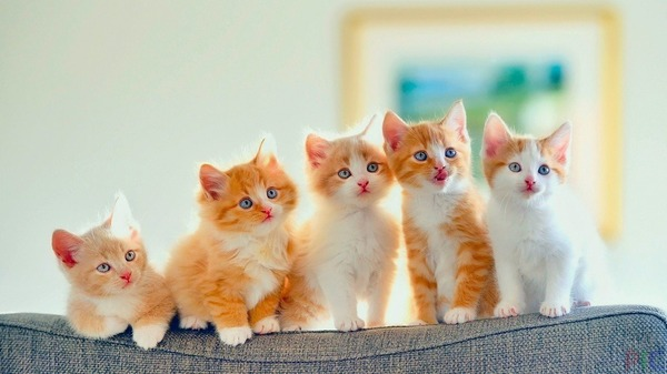 things about kittens and cats