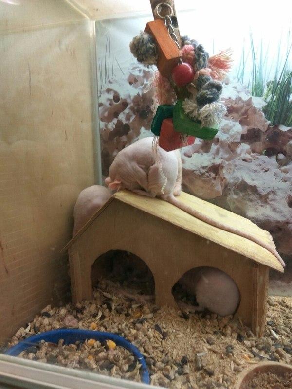 После тяжелого дня Мышь, Сон