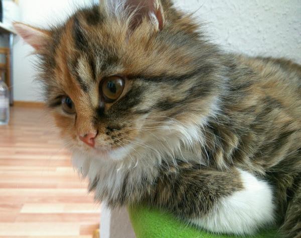 Разбавлю ленту котейкой Xiaomi redmi note 3 pro, Фото, Кот, Скрепка