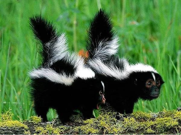9 гибридов животных из твоих кошмарных снов Photoshop, Животные, Длиннопост