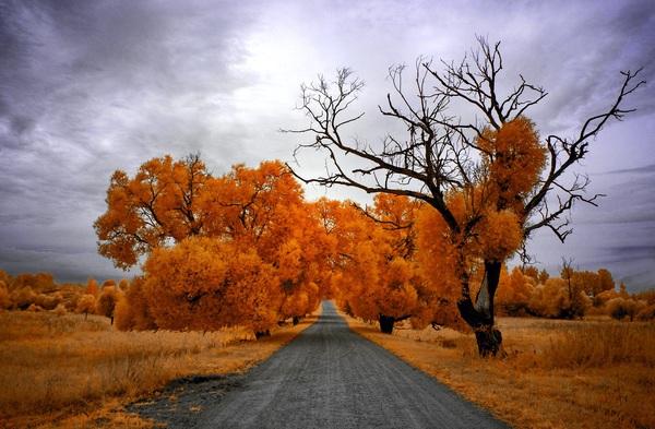 Инфракрасные фотографии Фото, Инфракрасная съёмка, Природа, Длиннопост
