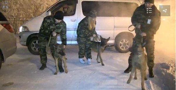 В Якутске появились клонированные служебные собаки из Кореи Собака, Клоны, Якутск, Корея
