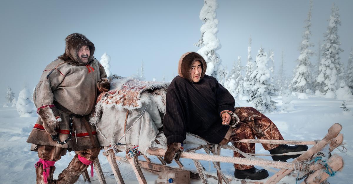 жители тундры самоеды картинки и фото горле результат заражения