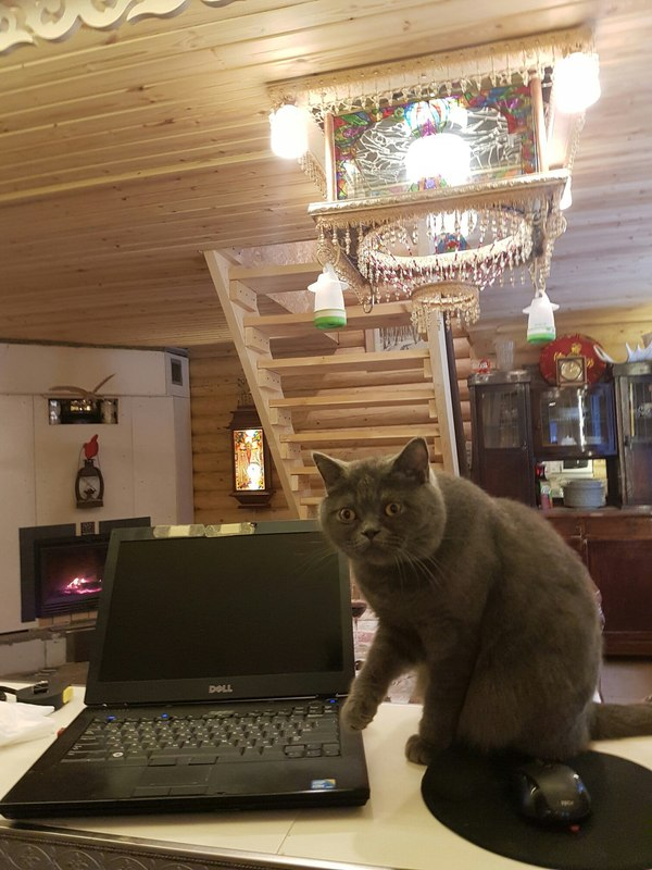 Да не устанавливал я браузер amigo на компьютер.