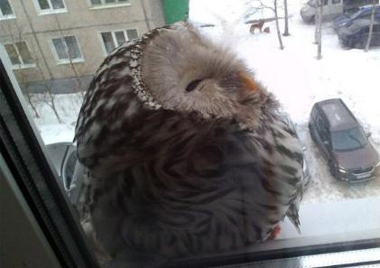 Отдёргиваю штору, а за окном... Гарри Поттер, Хогвартс, Сова, Письмо из Хогвартса