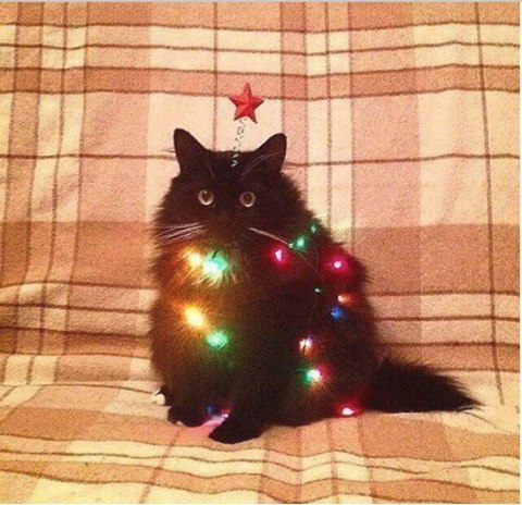 Когда хочется праздника, а ёлки ещё нет... Кот, Зима, Новый Год, Картинки