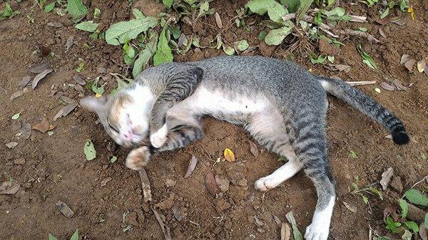 cat calming spray canada