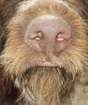 Этот нос сделал мой день) Собака, Сходство, Путешественник