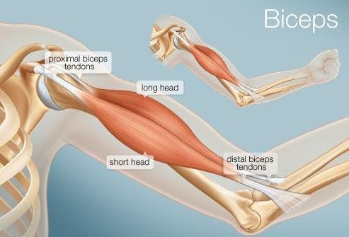 Болит логтевой сустав бодибилдинг боль в суставах и в спине