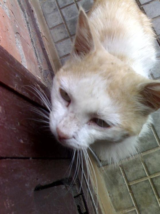 У меня умер кот как успокоится