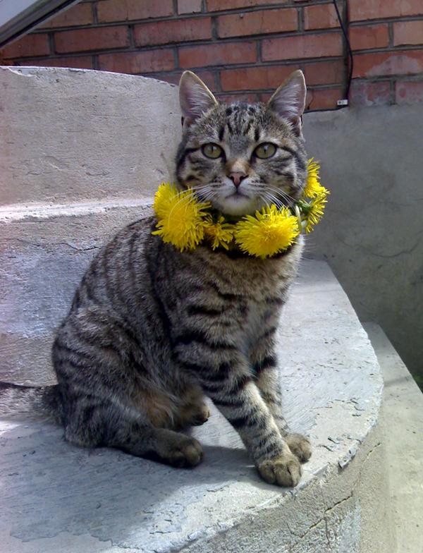 Кот не живой и не мертвый