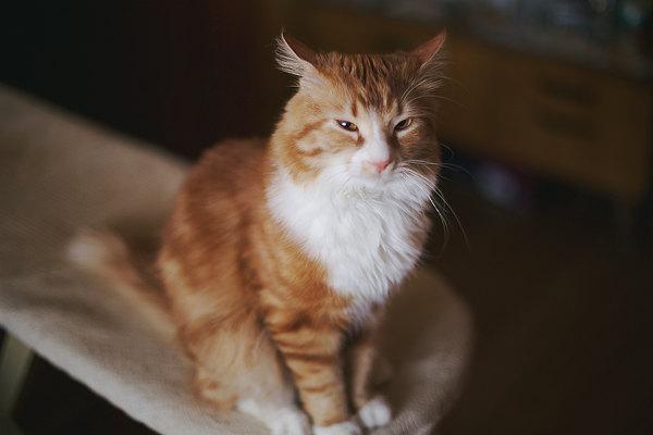 Говорят, тут любят котиков Кот, Фото, Животные