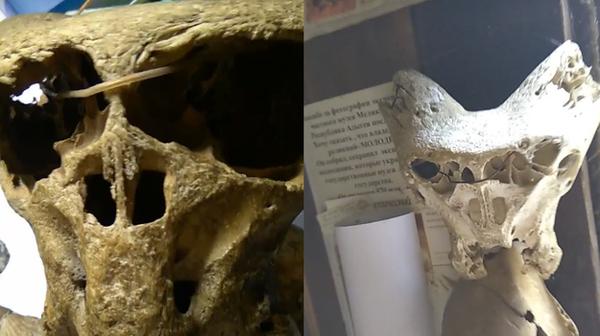 В кавказских горах обнаружен сундук с эмблемой «Аненербе» и черепами неизвестных существ. Mass effect, Ананербе, Череп, Находка, Сундук, Нацисты
