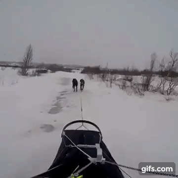 Не обгоняй. Видео, Гифка, Собака, Лыжи, Лыжники, Животные, Питомец