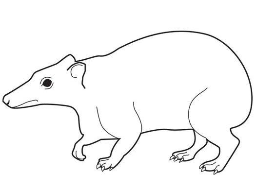Самые удивительные слоны прошлого Слоны, Хоботные, Палеонтология, Наука, Животные, Кайнозой, Длиннопост