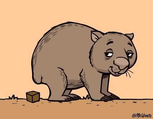 Маленький вомбат Вомбаты, Животные, Биология, Австралия, Сумчатые, Детеныш, Медведь, Гифка