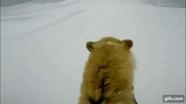 Прокатили. Видео, Гифка, Собака, Животные, Питомец, Лыжи, Спуск, Спуск с горы