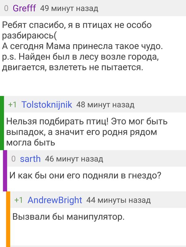 Комментарии радуют) комментарии на  пикабу, мобильная версия, пост