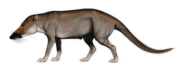 Как киты оказались родственниками парнокопытных Эволюция, Палеонтология, Животные, Наука, Кайнозой, Кит, Дельфин, Длиннопост