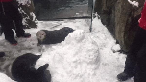 Выдра лепит снеговика