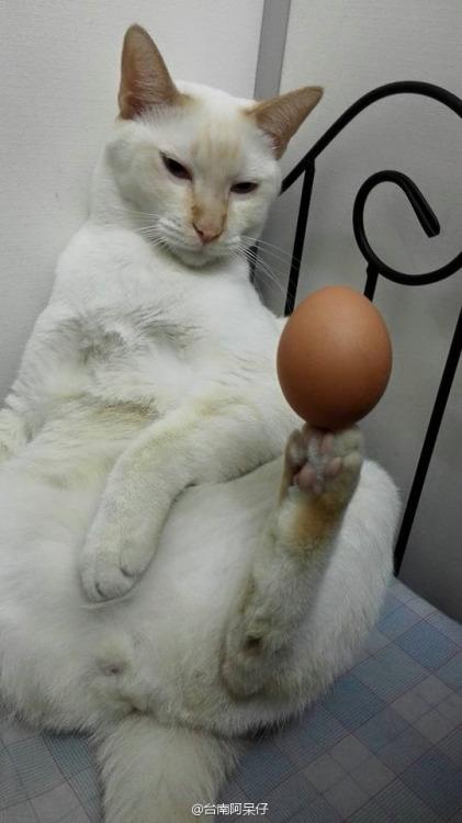 Прекрасное чувство равновесия Кот, Равновесие, Яйцо, Карты, Пистолеты, Длиннопост