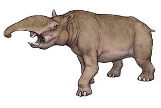 Южная Америка — история одной изоляции Кайнозой, Наука, Биология, Палеонтология, Животные, Южная Америка, Млекопитающие, Длиннопост