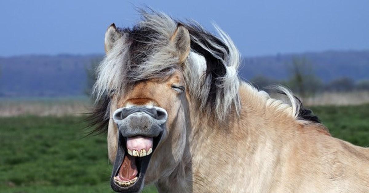 Картинка улыбка лошади смешные