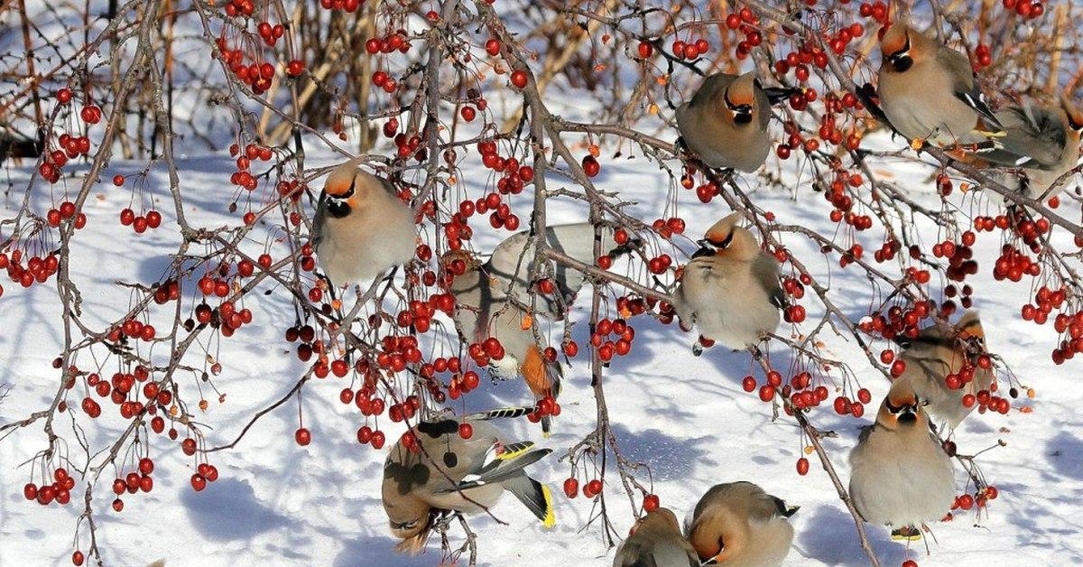 птицы зимой на деревьях порошковый зеленый