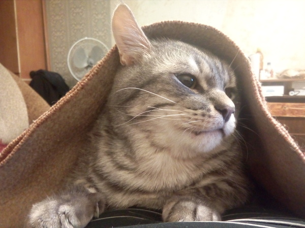 Похолодало у нас.. Кот, Холод, Зима