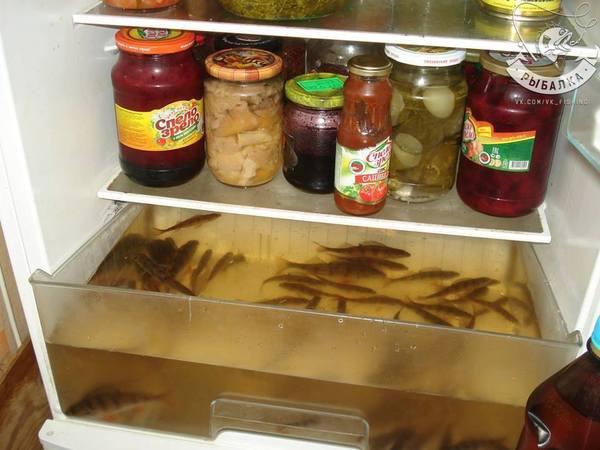 Аквахолодильник. рыбалка, аквариум, домашние животные, юморист