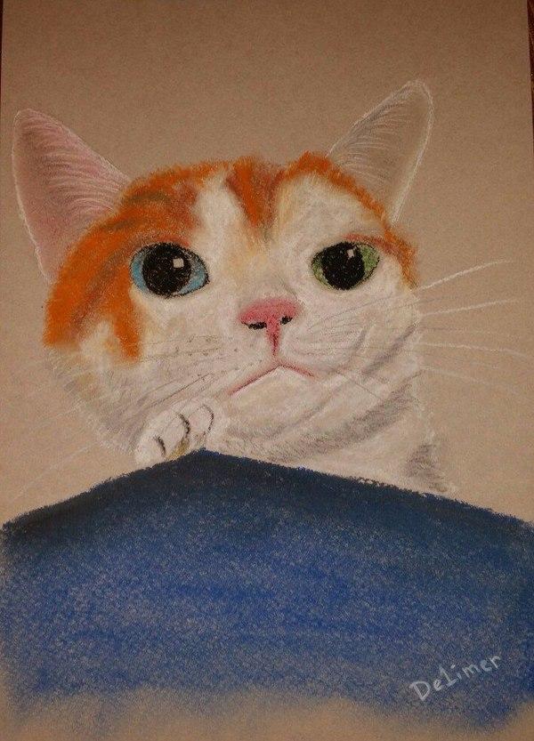 Симпатичный котик