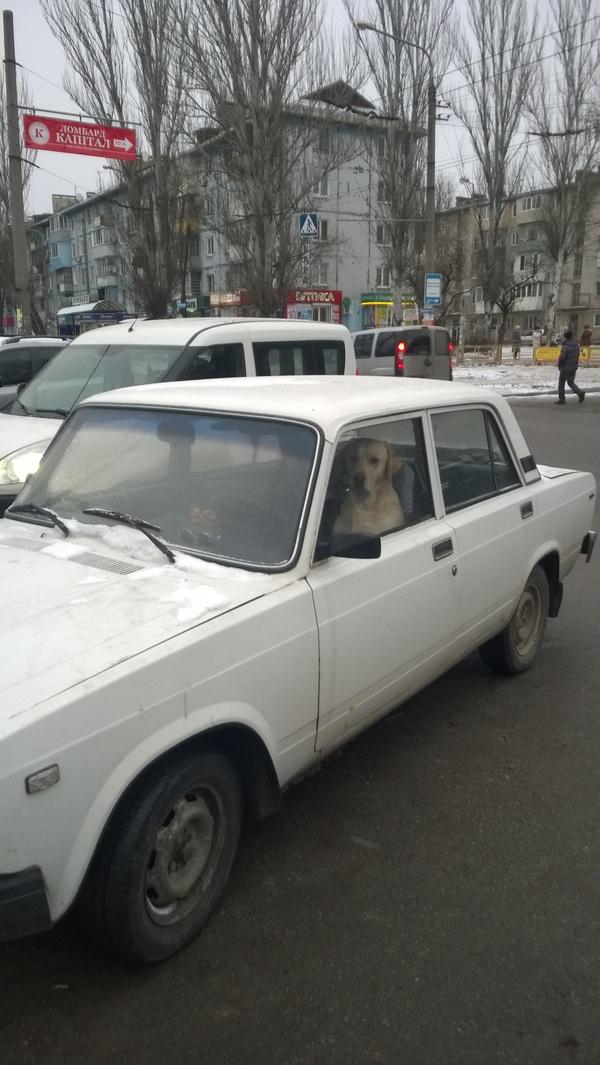 Собака - ведром управляка Собака, Машина