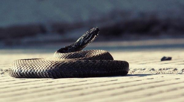 Наши гости Змея, Фотография, Мыльница, Удачный кадр, Незванные гости