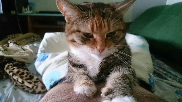 Кошка нашла баг, что делать? Кот, Сон, Баг