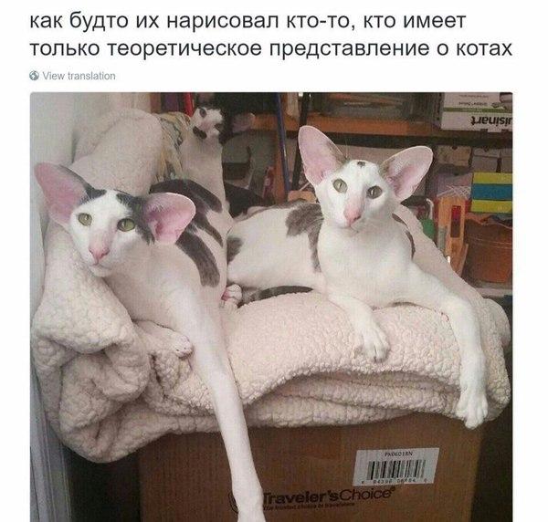 Коты армяне