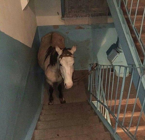 """В Коми коня """"припарковали"""" в подъезде многоквартирного дома"""