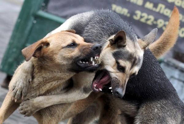 Зоозащита в бешенстве.  В Волгограде предстоит отловить 105 бродячих собак. Волгоград, отлов, защита животных, бродячие псы, Собака, длиннопост