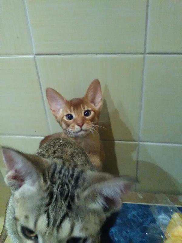 Картинка кота пока