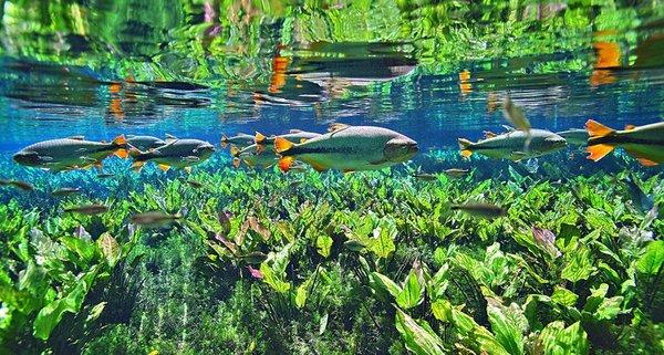 Подводные пейзажи Бразилии (Часть 1) Бразилия, Рыба, подводная съемка, Природа, растения, длиннопост
