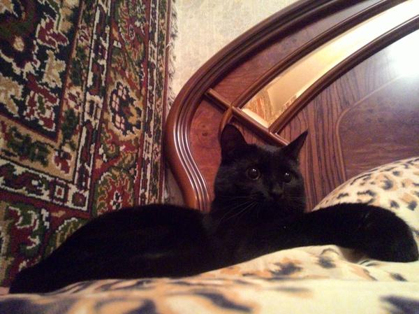 Черный кот по имени Брюс кот, черный, скука, длиннопост