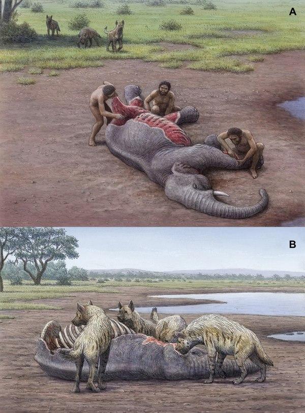 Миллион лет назад гигантские гиены конкурировали с человеком. Палеонтология, Кайнозой, Гиена, Длиннопост