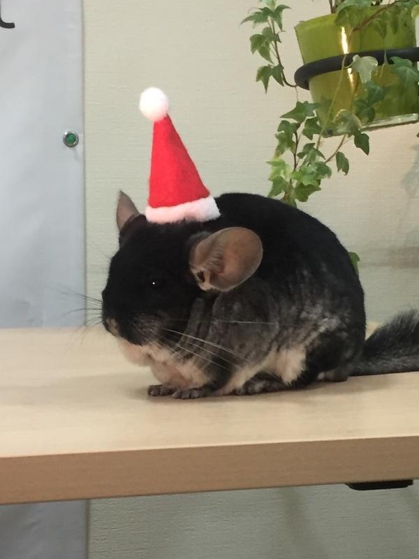 Мартин поздравляет вас с Новым годом