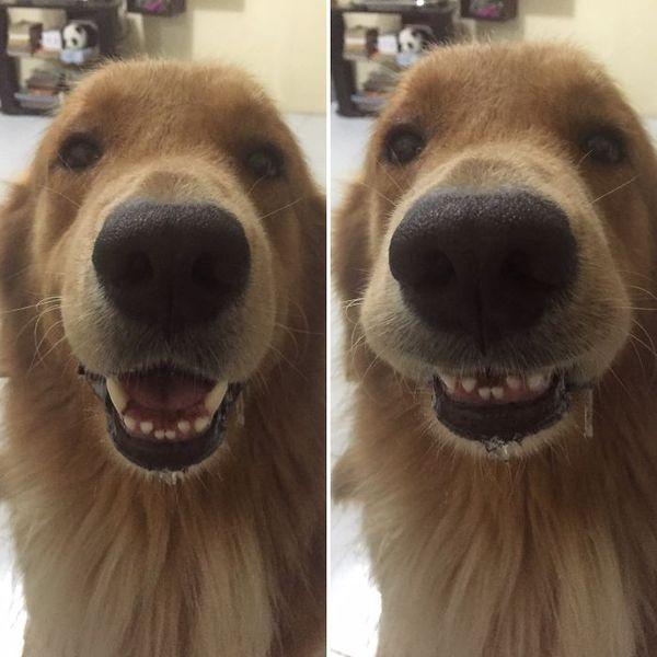 Когда тебя похвалили: до и после кот, Собака, попугай, черепаха, похвала, длиннопост