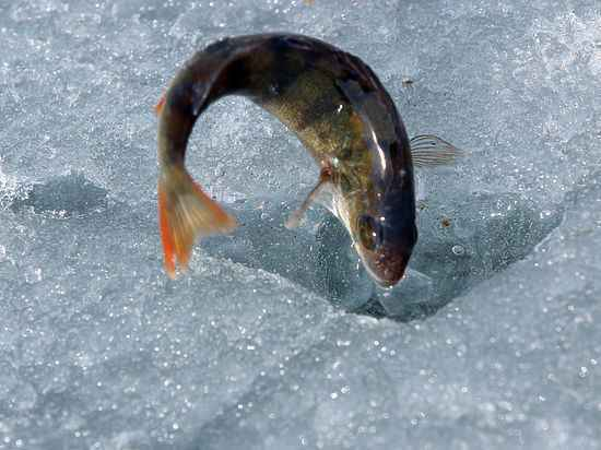 патент на рыбную ловлю