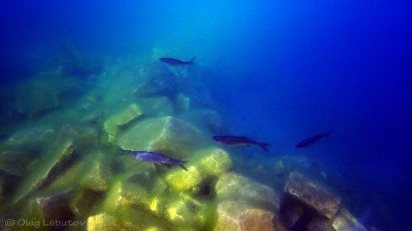 Подводные пейзажи России (Часть1) Россия, Фото, подводная съемка, Рыба, Природа, длиннопост