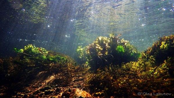 Подводные пейзажи России (Часть 2) Россия, подводная съемка, Природа, Рыба, длиннопост