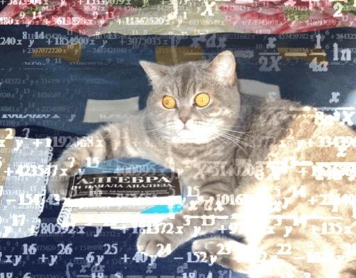 По мотивам алгеброкота кот, Алгебра, гифка, анимация, кот дождя