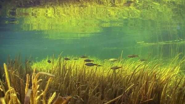 Подводные пейзажи Европы (Часть 1) подводная съемка, Европа, Рыба, растения, Природа, длиннопост
